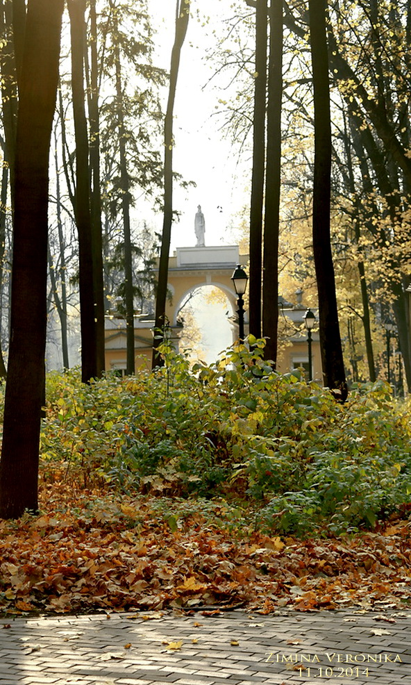 Автор фото - Вероника Зимина