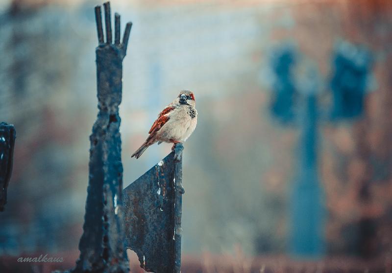 Парк Музеон. Фото Амалии Усикян