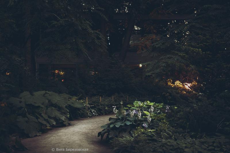 Аптекарский огород. Фото Виты Березовской