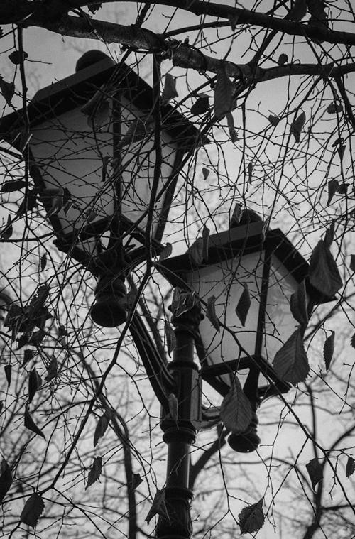 Фотопрогулка OPEN FOTO «Графика московских бульваров». Фото Галины Бехметьевой