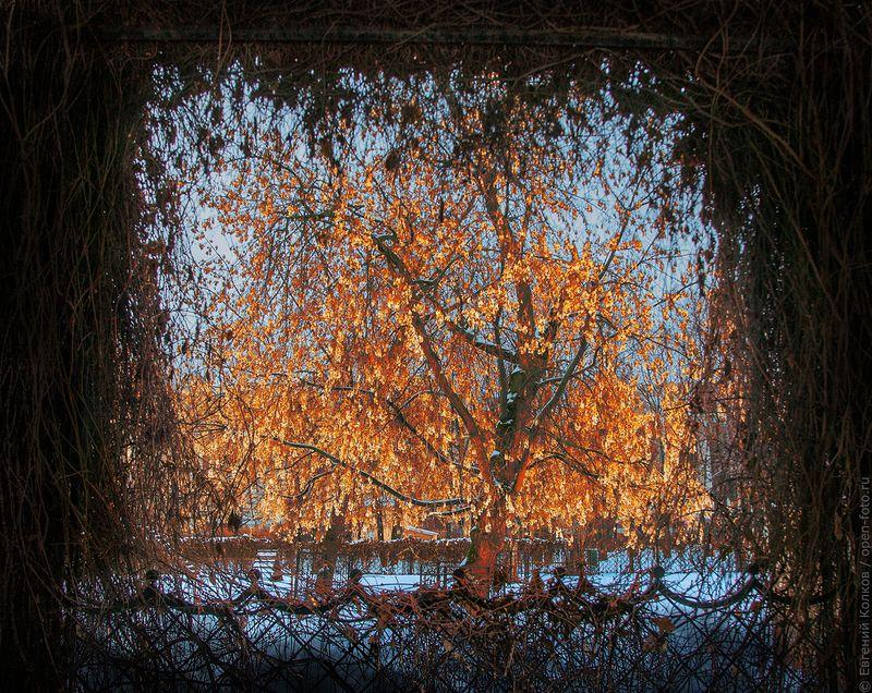 Парк «Усадьба Трубецких в Хамовниках». Фотограф - Евгений Колков