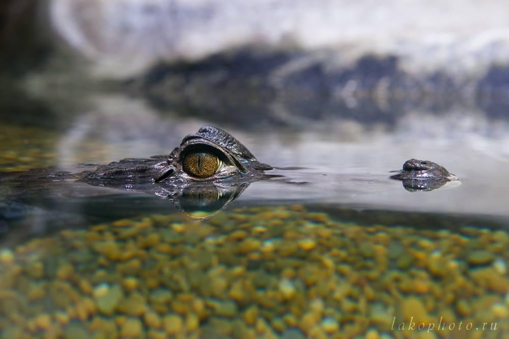 Фото Константина Пухова