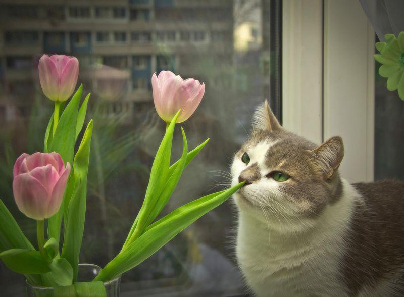 Фото Елены Басовой
