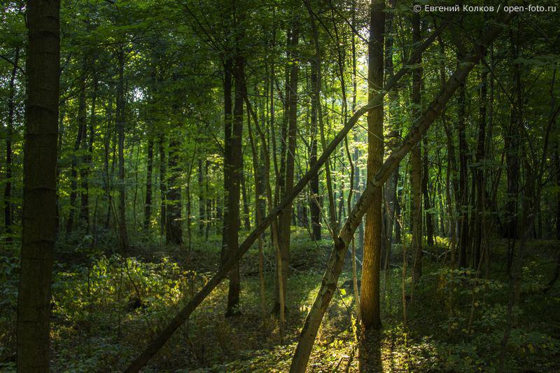 Измайловский лесопарк. Фото: Евгений Колков