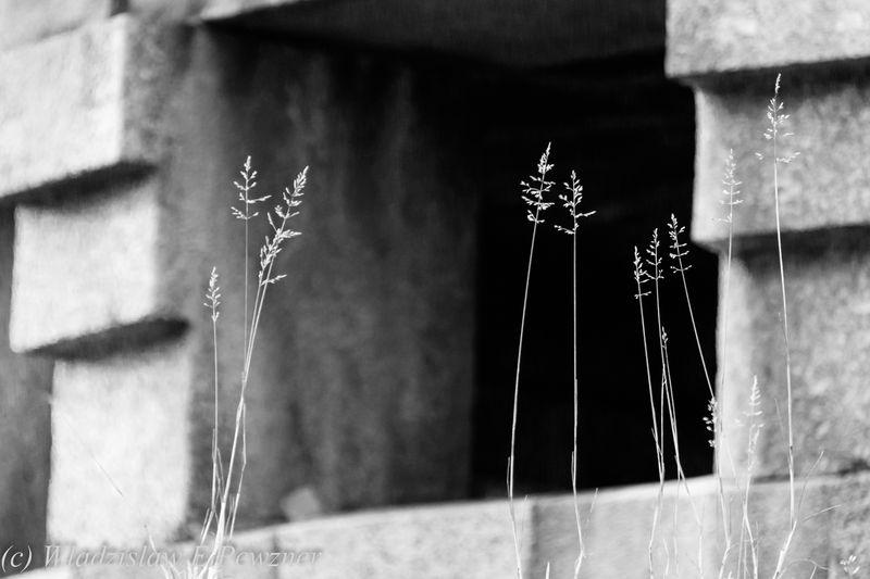 Всемирная фотопрогулка 2016. Конкурс. Фото Владислава Певзнера