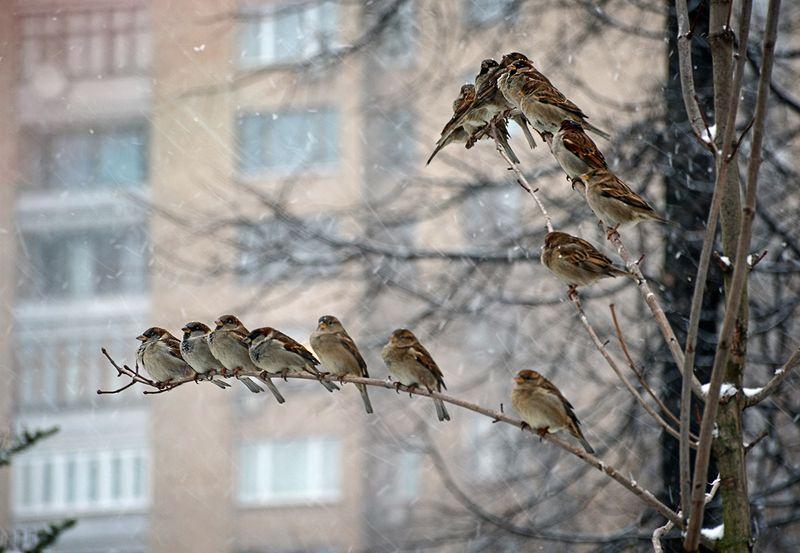Усадьба Трубецких в Хамовниках. Фотограф - Светлана Пяткова