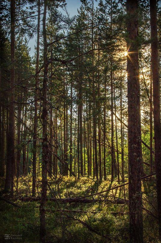 Пейзажная съемка в лесу. Фото: Евгений Колков