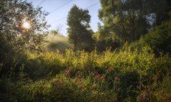 Съемка природы. Фото: Евгений Колков