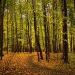 Съемка в лесу. Фотограф - Евгений Колков